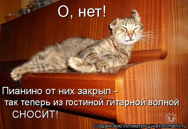Котоматрица: так теперь из гостиной гитарной волной Пианино от них закрыл -  СНОСИТ! О, нет!