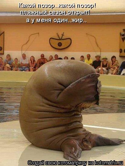Котоматрица: Какой позор..какой позор! пляжный сезон открыт!  а у меня один..жир..