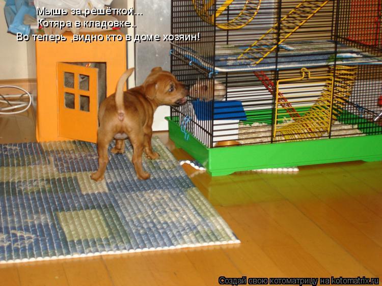 Котоматрица: Котяра в кладовке.. Во теперь ,видно кто в доме хозяин! Мышь за решёткой...
