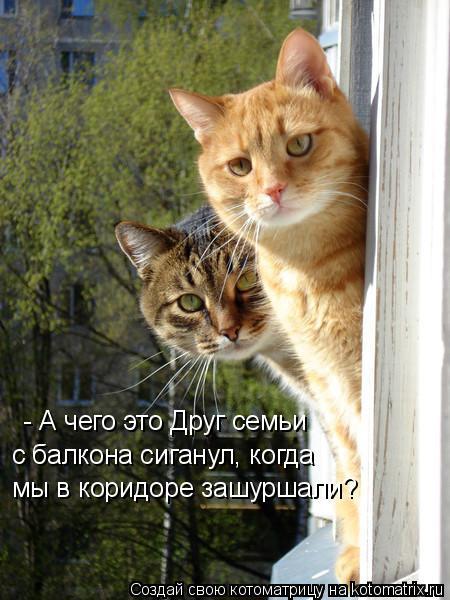 Котоматрица: - А чего это Друг семьи мы в коридоре зашуршали? с балкона сиганул, когда
