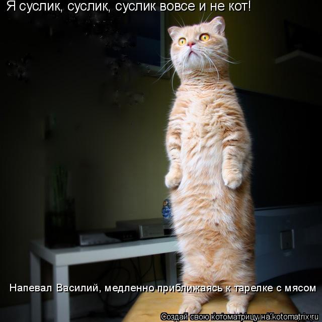 Котоматрица: «Я суслик, суслик, суслик вовсе и не кот!»  Напевал Василий, медленно приближаясь к тарелке с мясом