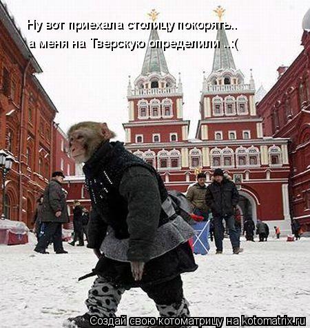 Котоматрица: Ну вот приехала столицу покорять.. а меня на Тверскую определили ..:(