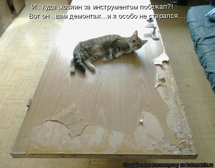 Котоматрица: И.. куда ,хозяин за инструментом побежал?! Вот он ..вам демонтаж...и я особо не старался....