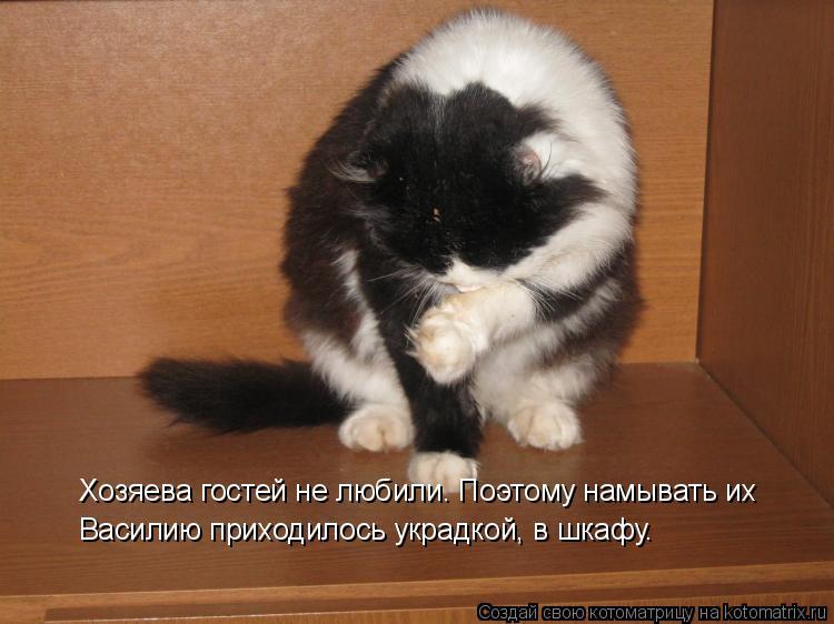 Котоматрица - Хозяева гостей не любили. Поэтому намывать их  Василию приходилось укр