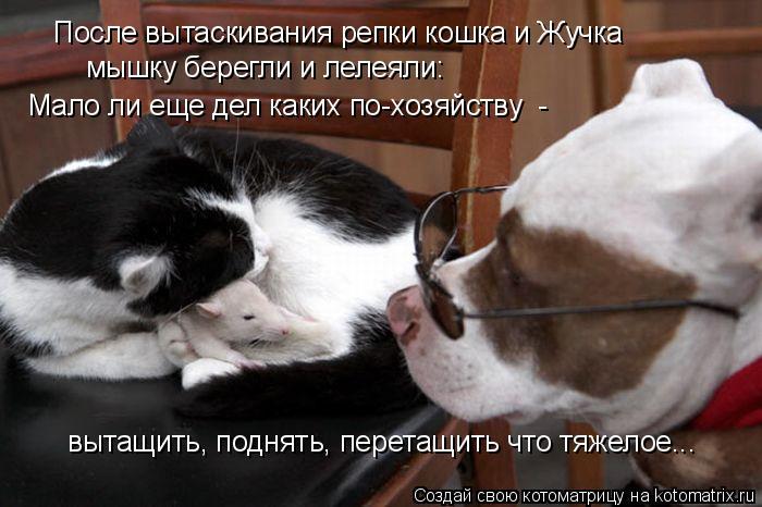 Котоматрица: После вытаскивания репки кошка и Жучка мышку берегли и лелеяли: Мало ли еще дел каких по-хозяйству  -  вытащить, поднять, перетащить что тяже