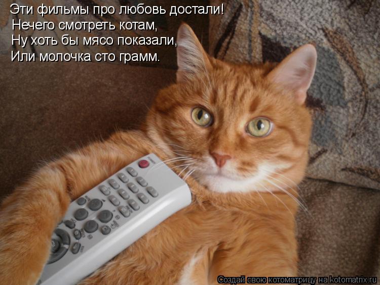 Котоматрица: Эти фильмы про любовь достали! Нечего смотреть котам, Ну хоть бы мясо показали, Или молочка сто грамм.