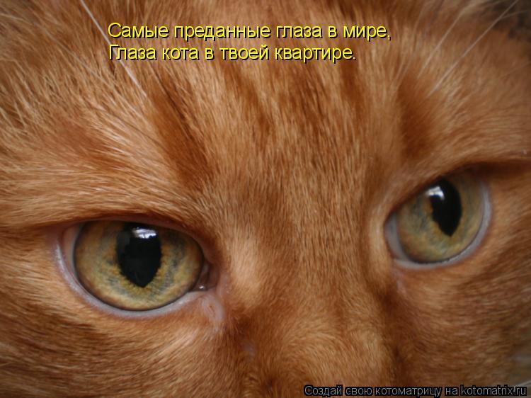 Котоматрица: Самые преданные глаза в мире, Глаза кота в твоей квартире.