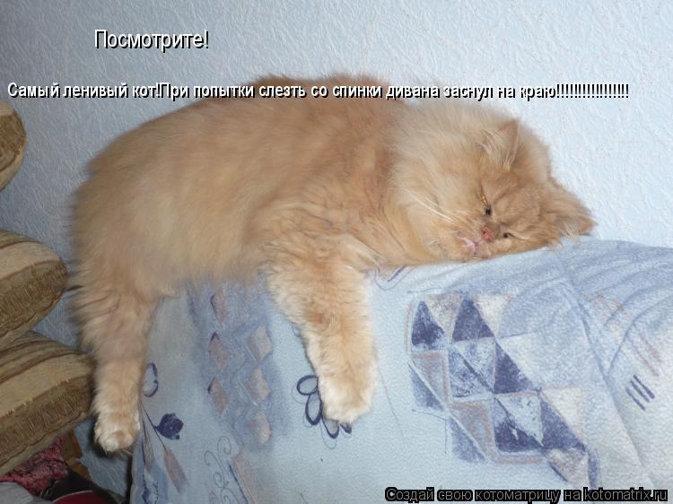 Кот и диван картинка