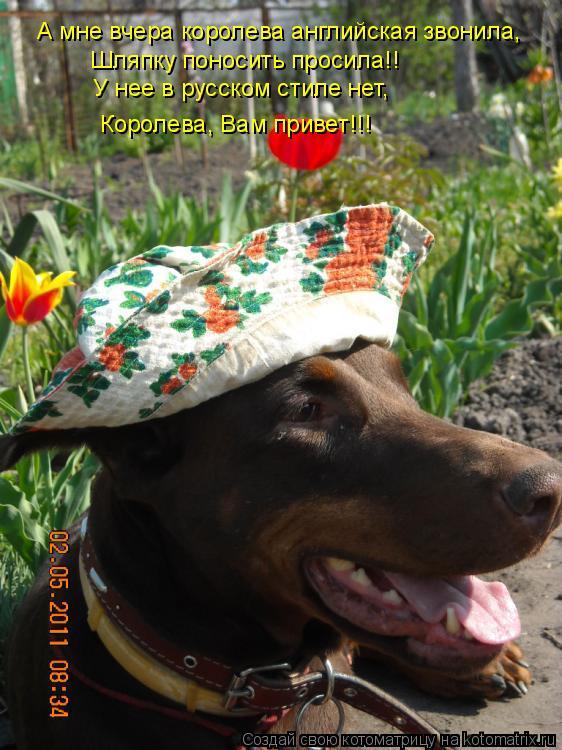 Котоматрица: А мне вчера королева английская звонила, Шляпку поносить просила!! У нее в русском стиле нет, Королева, Вам привет!!!