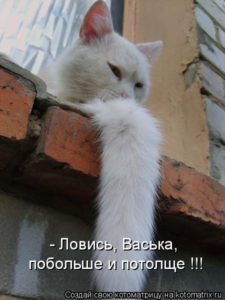 Котоматрица: - Ловись, Васька, побольше и потолще !!!