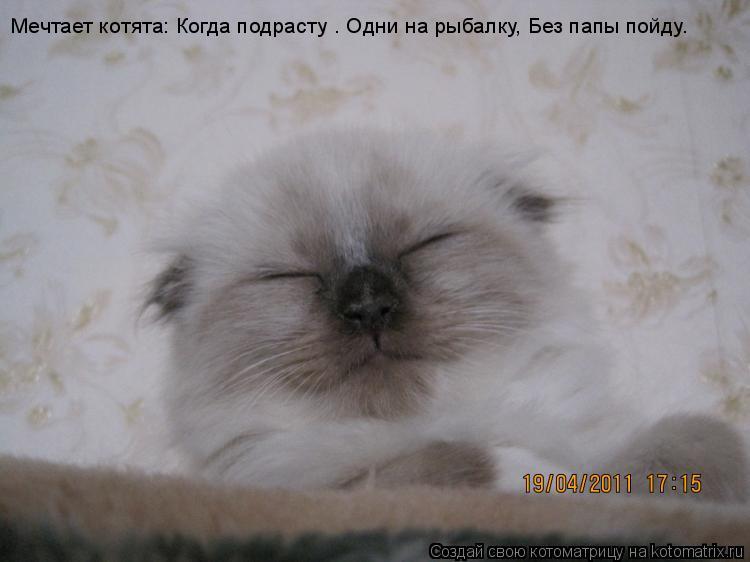Котоматрица: Мечтает котята: Когда подрасту — Одни на рыбалку, Без папы пойду.