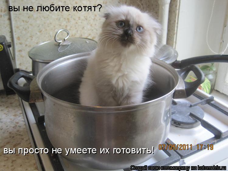 Котоматрица: вы не любите котят? вы просто не умеете их готовить!