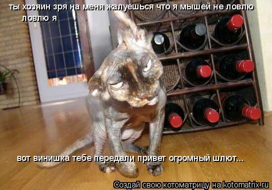 Котоматрица: ты хозяин зря на меня жалуешься что я мышей не ловлю ловлю я  вот винишка тебе передали привет огромный шлют...