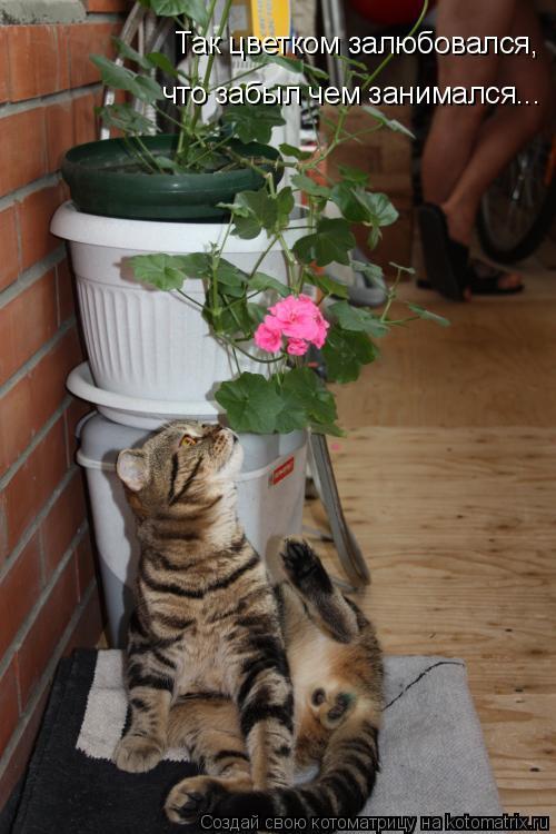 Котоматрица - Так цветком залюбовался, что забыл чем занимался...