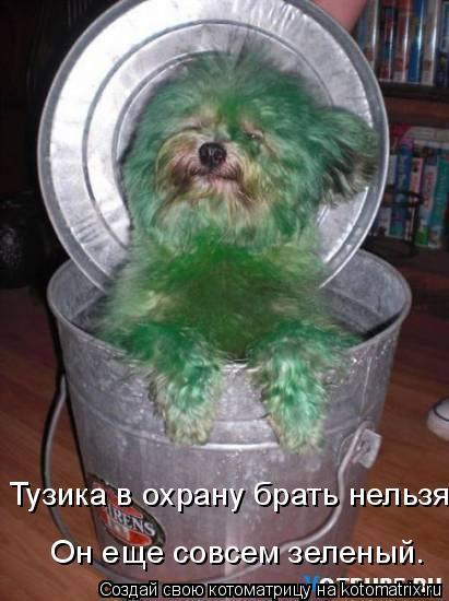 Котоматрица - Тузика в охрану брать нельзя.  Он еще совсем зеленый.