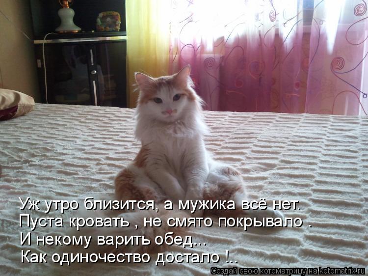 Котоматрица: Уж утро близится, а мужика всё нет. Пуста кровать , не смято покрывало .  И некому варить обед... Как одиночество достало !..