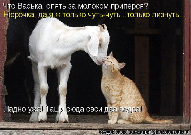 Котоматрица: Что Васька, опять за молоком приперся? Нюрочка, да я ж только чуть-чуть...только лизнуть... Ладно уже! Тащи сюда свои два ведра!