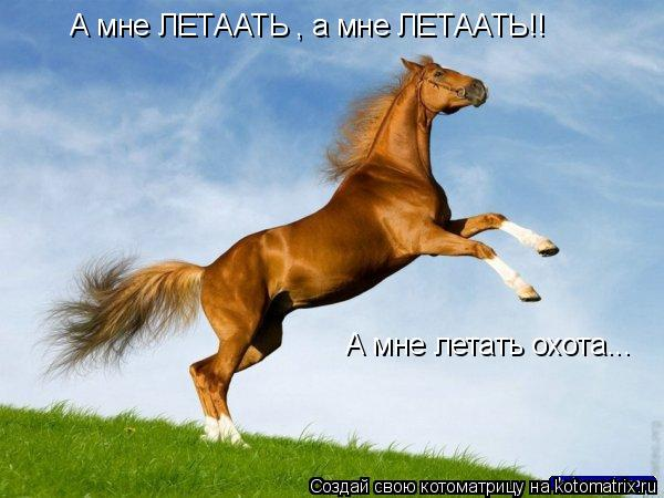 Котоматрица: А мне ЛЕТААТЬ , а мне ЛЕТААТЬ!! А мне летать охота...