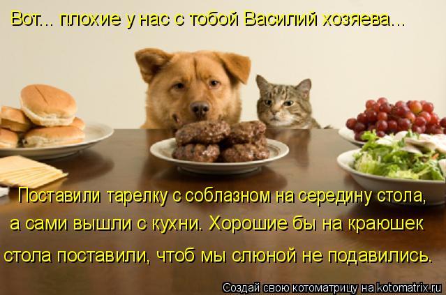 Котоматрица: Вот... плохие у нас с тобой Василий хозяева...   Поставили тарелку с соблазном на середину стола,  а сами вышли с кухни. Хорошие бы на краюшек  с