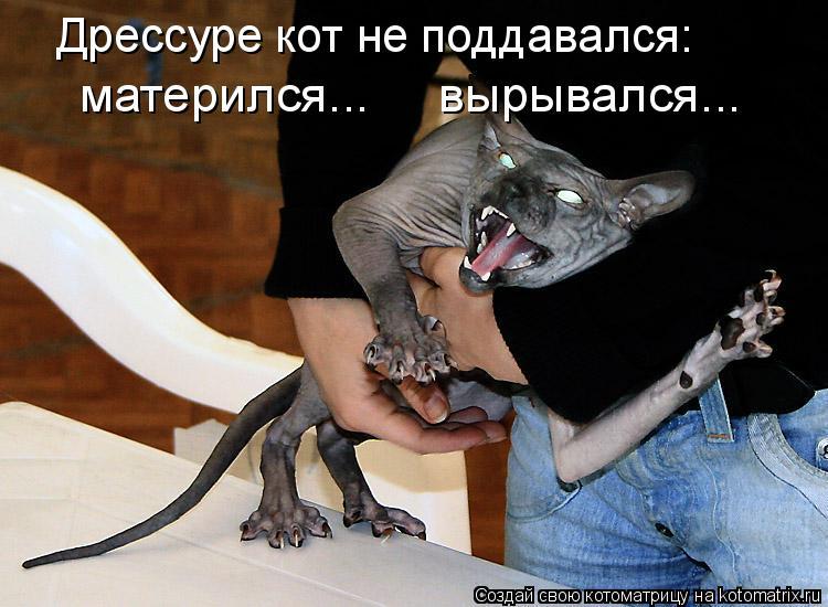 Котоматрица: Дрессуре кот не поддавался: матерился...     вырывался...