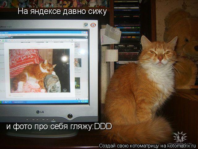 Котоматрица: На яндексе давно сижу и фото про себя гляжу:DDD