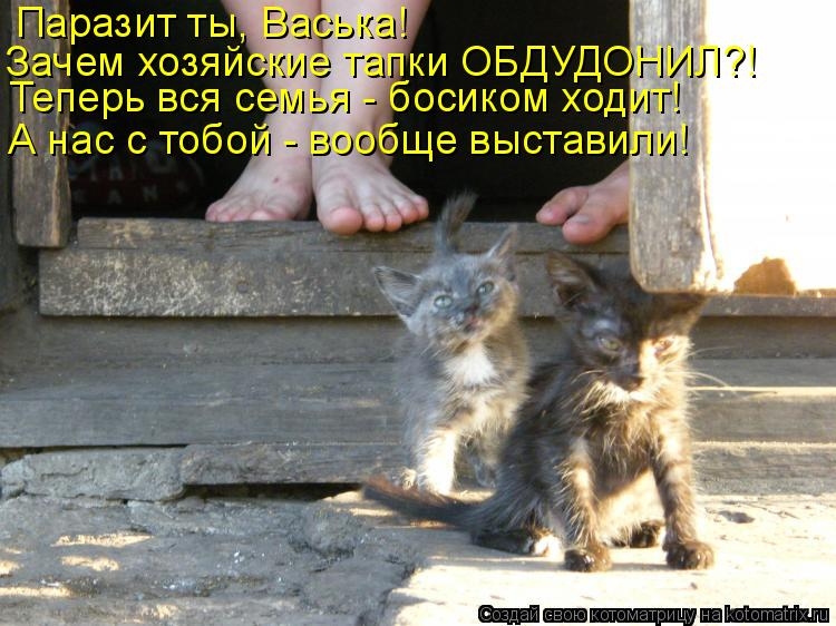 Котоматрица - Паразит ты, Васька! Зачем хозяйские тапки ОБДУДОНИЛ?! Теперь вся семья