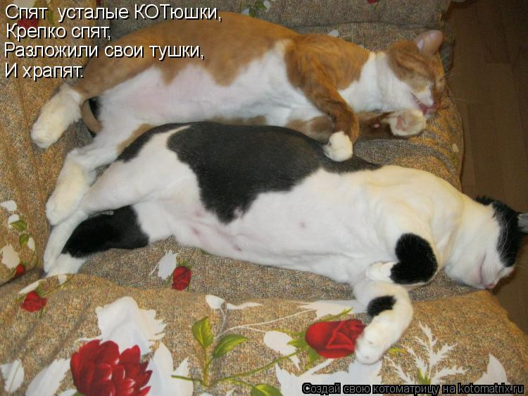 Котоматрица: Спят  усталые КОТюшки, Крепко спят, Разложили свои тушки, И храпят.