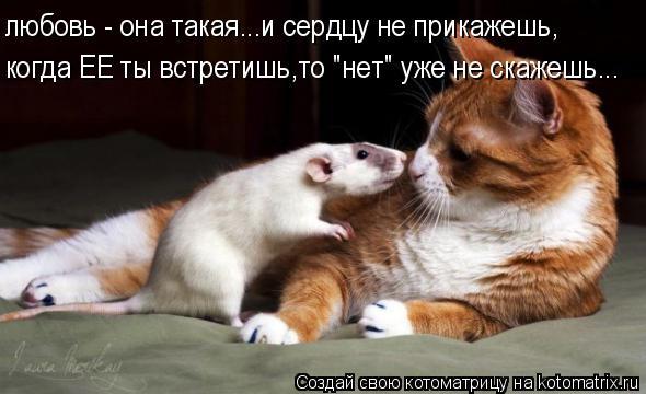 """Котоматрица: любовь - она такая...и сердцу не прикажешь, когда ЕЕ ты встретишь,то """"нет"""" уже не скажешь..."""