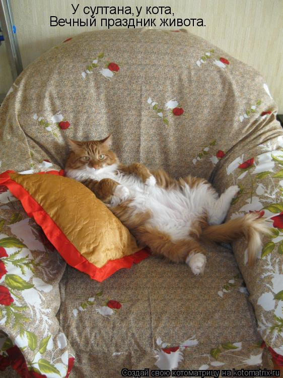 Котоматрица: У султана,у кота, Вечный праздник живота.