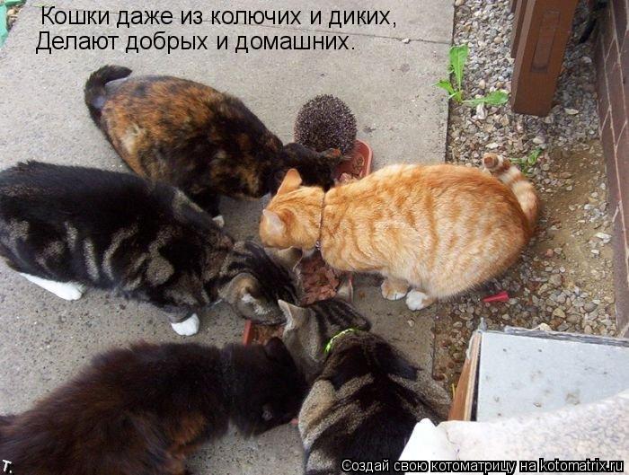 Котоматрица: Кошки даже из колючих и диких, Делают добрых и домашних.