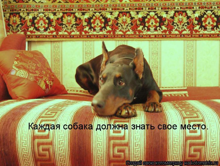 Котоматрица: Каждая собака должна знать свое место.