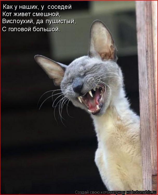 Котоматрица: Как у наших, у  соседей Кот живет смешной, Вислоухий, да пушистый, С головой большой.