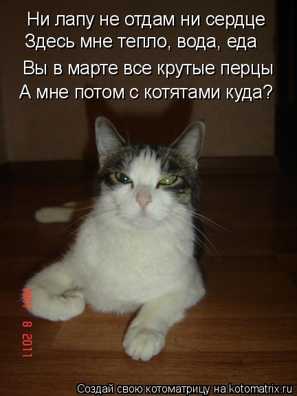 Котоматрица: Ни лапу не отдам ни сердце Вы в марте все крутые перцы Здесь мне тепло, вода, еда А мне потом с котятами куда?