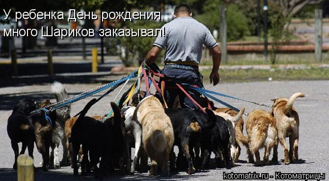 Котоматрица: У ребенка День рождения, много Шариков заказывал!