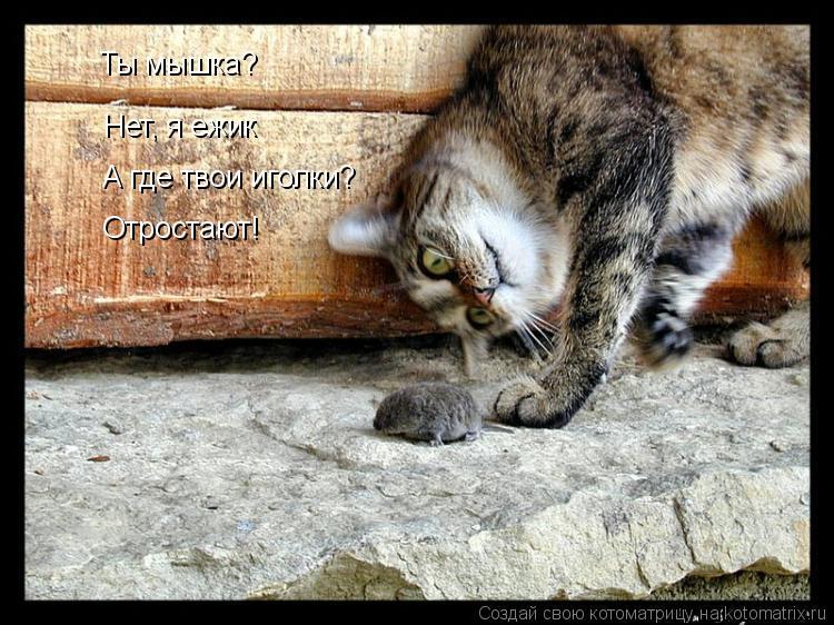 Котоматрица: Ты мышка? Нет, я ежик А где твои иголки? Отростают!