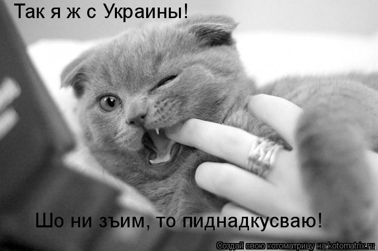 Котоматрица: Так я ж с Украины! Шо ни зъим, то пиднадкусваю!