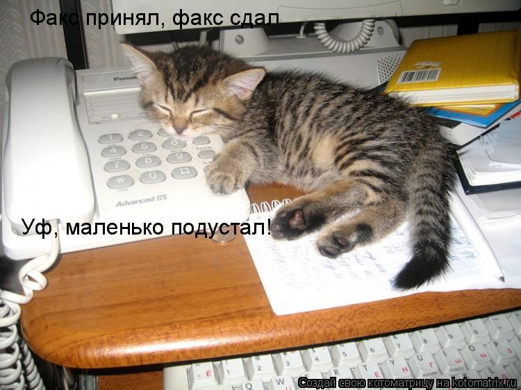 Котоматрица: Факс принял, факс сдал. Уф, маленько подустал!