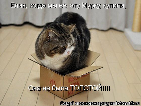 Котоматрица: Блин, когда мы её, эту Мурку, купили,  Она не была ТОЛСТОЙ!!!!