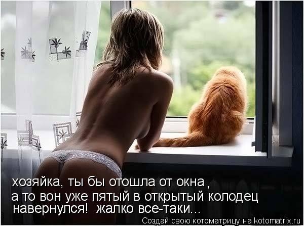 Котоматрица: хозяйка, ты бы отошла от окна , а то вон уже пятый в открытый колодец  навернулся!  жалко все-таки... навернулся!  жалко все-таки...