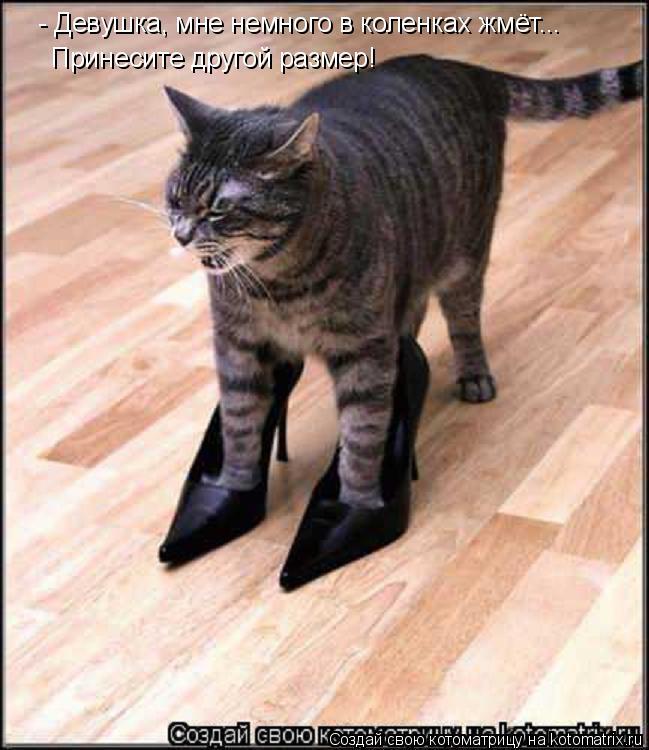Котоматрица: - Девушка, мне немного в коленках жмёт... Принесите другой размер!