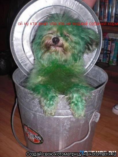 Котоматрица: ой ну кто знал что это не жидкий собачий корм!