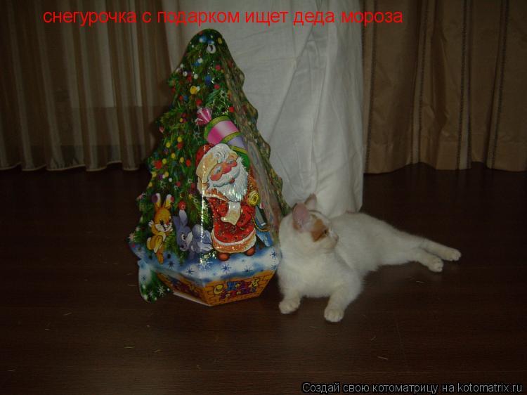 Котоматрица: снегурочка с подарком ищет деда мороза