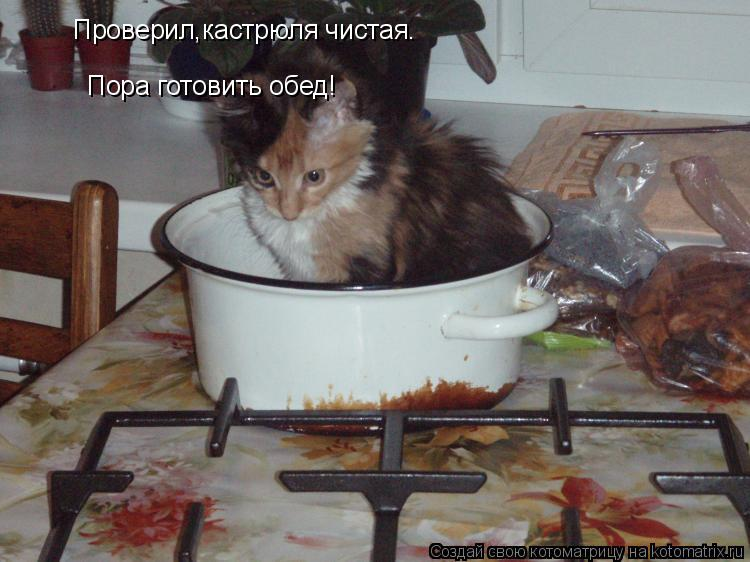 Котоматрица: Проверил,кастрюля чистая. Пора готовить обед!