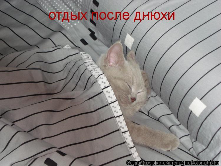 Котоматрица: отдых после днюхи