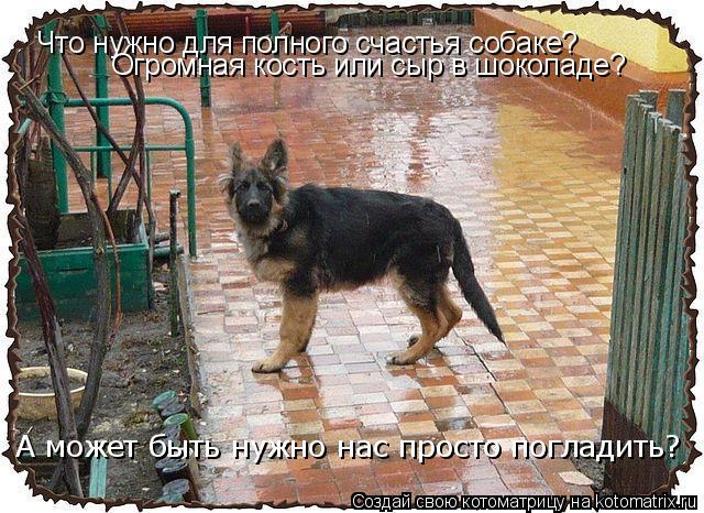 Котоматрица: Что нужно для полного счастья собаке? Огромная кость или сыр в шоколаде? А может быть нужно нас просто погладить?