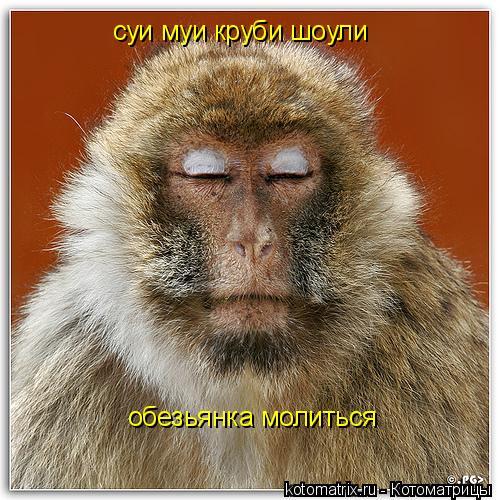 Котоматрица: суи муи круби шоули обезьянка молиться