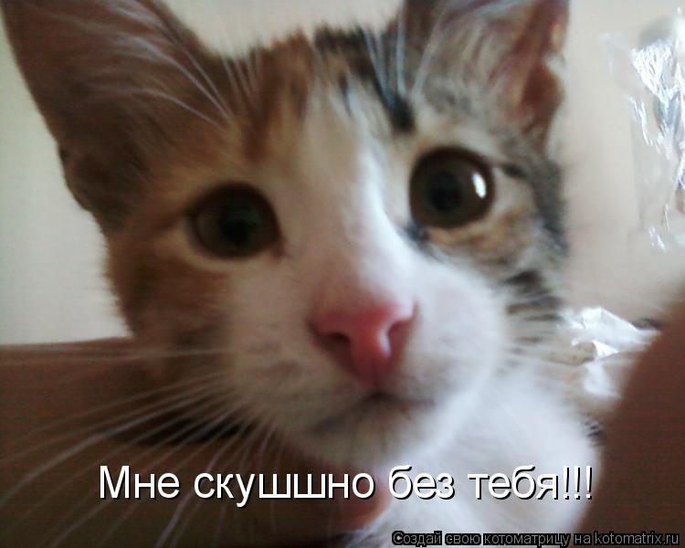 Котоматрица: Мне скушшно без тебя!!!