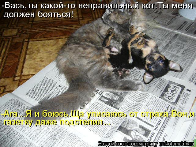 Котоматрица - -Вась,ты какой-то неправильный кот!Ты меня должен бояться! газетку даж