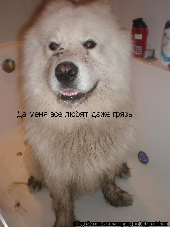 Котоматрица: Да меня все любят, даже грязь.