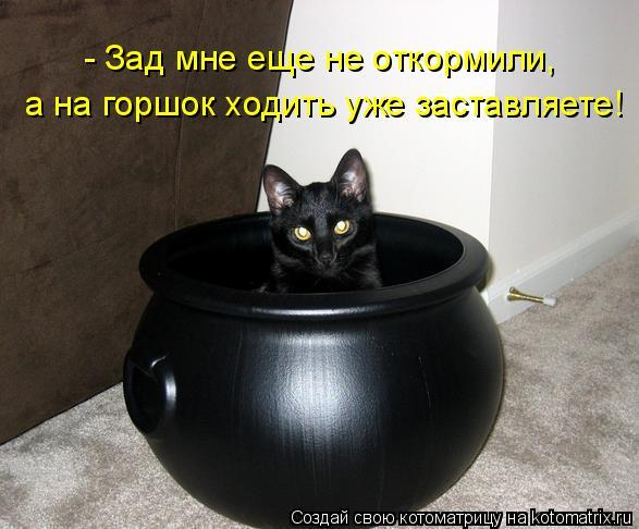 Котоматрица: - Зад мне еще не откормили, а на горшок ходить уже заставляете!